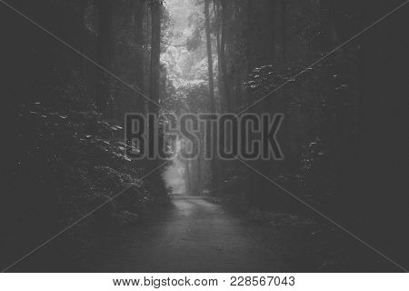 Moody Hazy Road In The Forest.