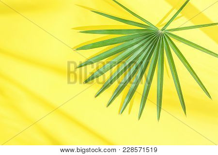 Beautiful Round Spiky Palm Tree Leaf On Bright Yellow Background In Sunlight Leaks. Top Viw Flat Lay