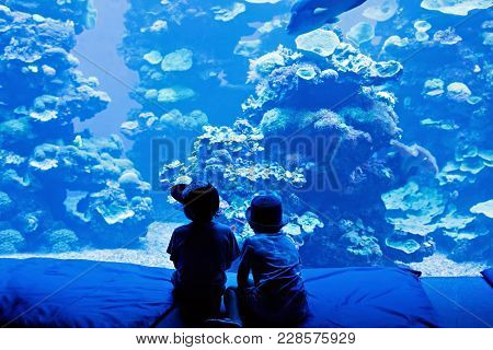 Two Little Kid Boys Observing Fishes In A Recreation Area Aquarium. Cute Siblings, Preschool Childre