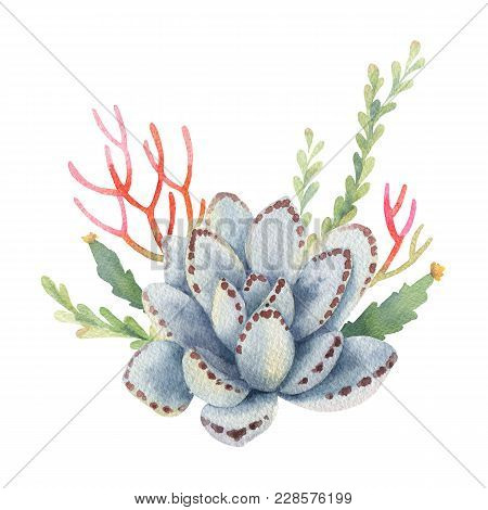 Watercolor Bouquet Of Cacti And Succulent Plants Isolated On White Background. Flower Illustration F