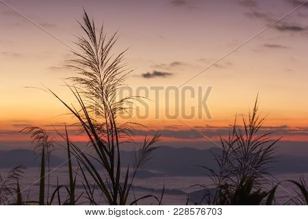 Silhouette Grass Flowers With Foggy Sea And Mountain Landscape In Early Morning