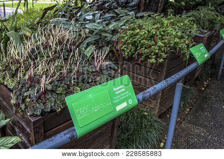 Curitiba, Brazil, December 30, 2017. Plates With Braille Language In The Garden Of Sensations, A Sen