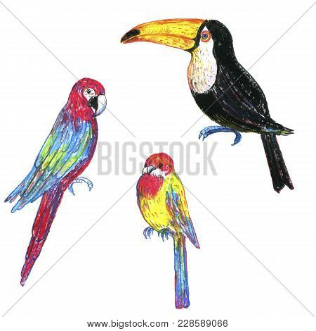 Drawing Exotic Birds, Toucan And Parrots, Hand Drawn Illustration
