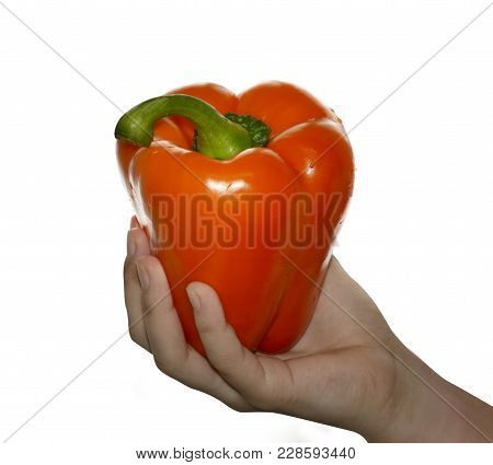 Hand Holding  Orange  Bell Pepper On White Isolated Background