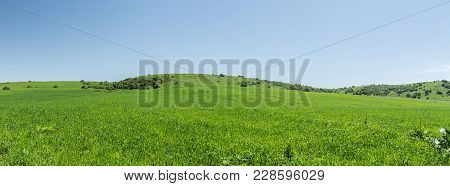 Green Foothills In The Grass, Panoramic View.