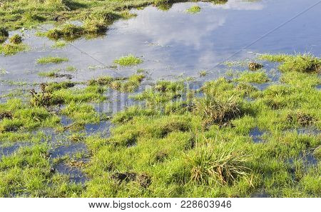 Boggy Place At Fall Season In Ukraine.