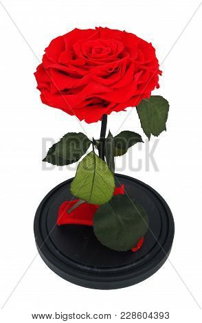 Red Rose.  Long-lasting Rose In A Flask, Stabilized, A Gift Eternal Forever Rose.
