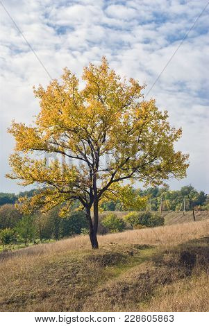 Lonely Apricot Tree On A Hill At Fall Season.