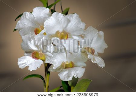 Background, Beautiful, Beauty, Bloom, Blossom, Botany, Bouquet, Branch, Bright, Bud, Closeup, Color,