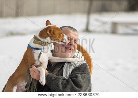 Cute Basenji Dog Licks The Master With Insistence