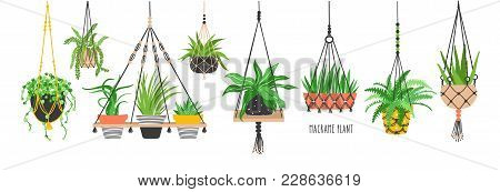Set Of Macrame Hangers For Plants Growing In Pots. Bundle Of Hanging Planters Made Of Cotton Cord, B