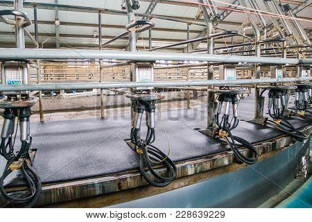 Cow Farm Producing Milk Curd Cheese Cows Milking Machine