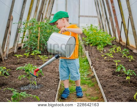 A Little Boy Watering From Watering The Beds In The Greenhouse