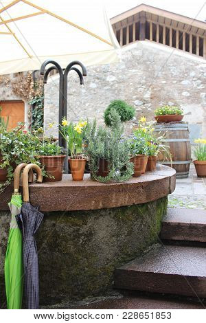 Pots With Herbs And Flowers In Town Square. Umbrellas Hanging On Staircase Construction With Potted