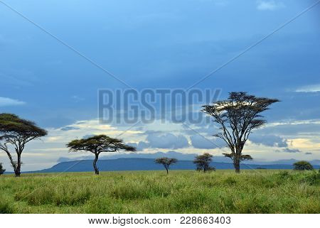 Beautiful Landscape With Acacia Trees In Savannah Of The Serengeti National Park Shown At Dawn, Tanz