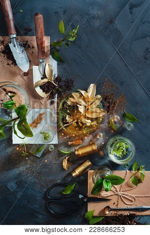 Botanist Workplace With Herbarium, Clipboard, Field Notes, Gardening Scissors And Green Plants In Gl