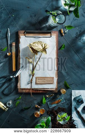 Botanist Workplace Overhead Shot With Herbarium, Clipboard, Field Notes, Gardening Scissors And Gree