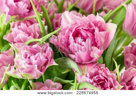 Close Up Of Fresh Rose Peony Tulpis. Spring Easter Background. Womans Greeting Card Concept.