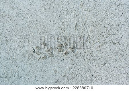 Top View To Two Dog Paw Prints Hardening In Grey Concrete.