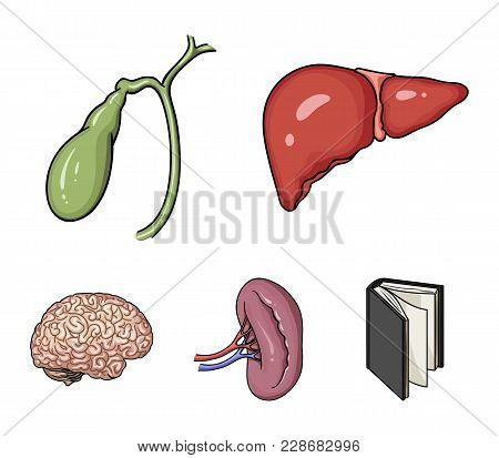 Liver, Gallbladder, Kidney, Brain. Human Organs Set Collection Icons In Cartoon Style Vector Symbol