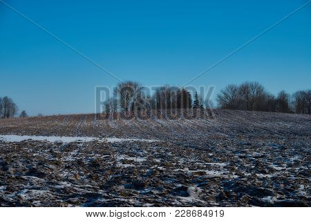 Group Of Trees On Farmyard Fields. Winter Landscape With Blue Sky And Clouds