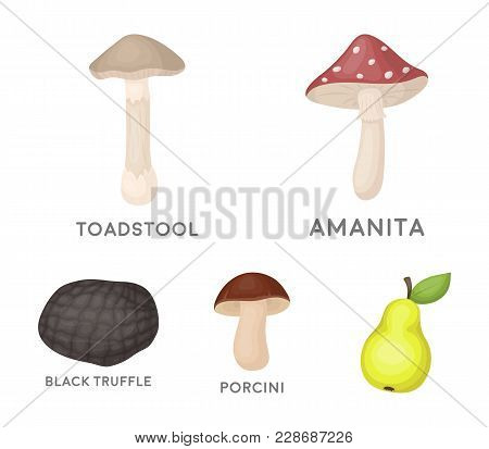 Amanita, Porcini, Black Truffle, Toadstool. Set Collection Icons In Cartoon Style Vector Symbol Stoc