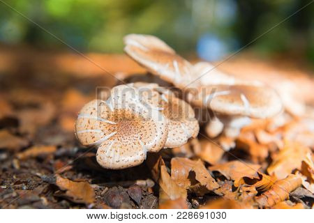 White toadstool in fall forest