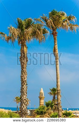 Sunny spring day. The palm trees and minaret. Ruins of the ancient city and port of Caesarea, Israel. Concept of archeological and historical tourism