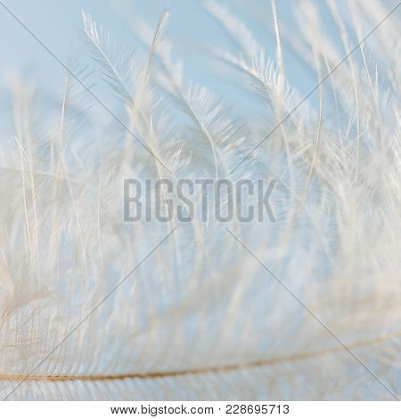 Feather abstract detail background