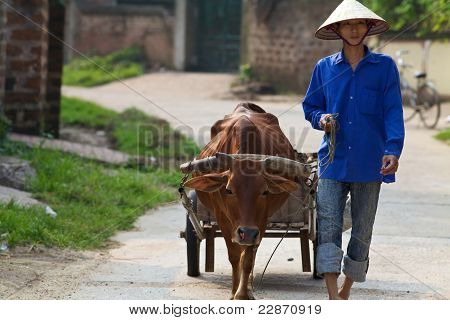 Vietnamese Man with Water Buffalo