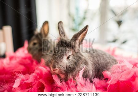 The Little Gray Bunny Rabbit Sitting In Pink Feathers On Against The Window. Easter Bunny In Pink Fe