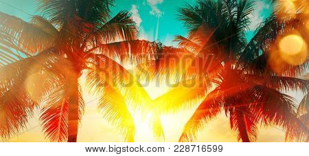 Tropical Palms tree over sunset sky. Exotic Palm trees and beautiful sky Background. Travel, Tourism, vacation concept backdrop. Sunflare. Paradise. Beautiful coconut palms silhouettes over orange sun