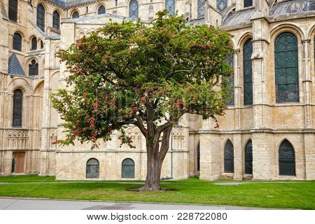 Bloobing tree at Canterbury Cathedral, one of the oldest and most famous Christian structures in England.  Canterbury, Kent Southern England, UK. UNESCO World Heritage Site