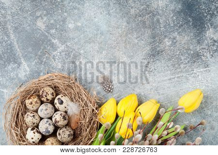 Quails eggs, yellow tulip flowers and pussy willow. Easter greeting card. Top view with space for your greetings