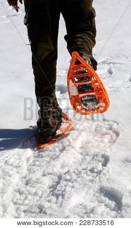 Man Walks With Modern Orange Snowshoes And Corduroy Pants On White Fresh Snow In Winter