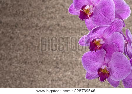 Pink orchid with space for your text.