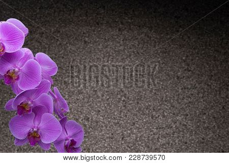 Orchid with Copy Space