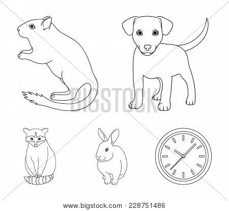 Puppy, Rodent, Rabbit And Other Animal Species.animals Set Collection Icons In Outline Style Vector