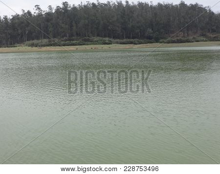 This Is Very Good View Of Ooty Lake.   Very Beautiful Photo From Ooty, India.