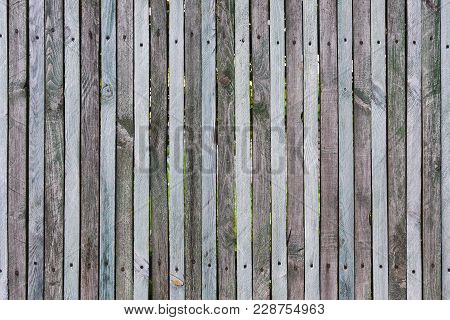 Wooden Fence From Thin Planks, Fixed By Nails And Screws, Many Knots, Cracks, Scratches, Chips And S