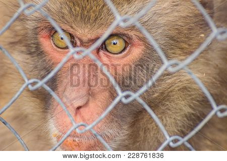 Cute Monkey Sitting In Cage Behind Bars