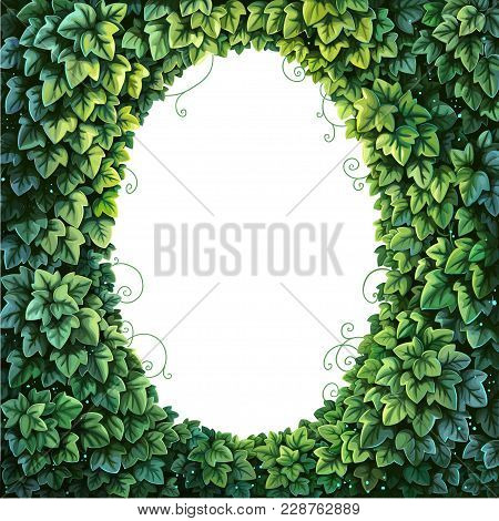 Oval Frame For Text Decoration Enchanted Forest From Green Ivy On A White Background