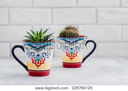 Green Cacti In Colorful Oriental Cups, Cactus Home Decoration Concept, Toned