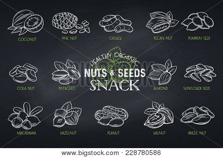 Set Vector Icons Hand Drawn Nuts And Seeds. Cola Nut, Pumpkin Seed, Peanut And Sunflower Seeds. Pist