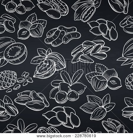 Vector Seamless Pattern With Hand Drawn Nuts And Seeds. Cola Nut, Pumpkin Seed, Peanut And Sunflower