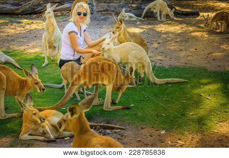 Young Caucasian Woman Feeds Kangaroos At A Park. Whiteman, Near Perth, Western Australia. Female Tou