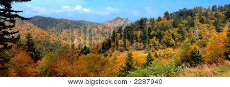 Fall Colors Panoramic