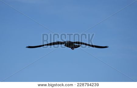 Photo Of A Sea Eagle Planned In The Sky