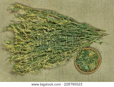 Melilot. Dry Herbs For Use In Alternative Medicine, Phytotherapy, Spa, Herbal Cosmetics. Preparing I