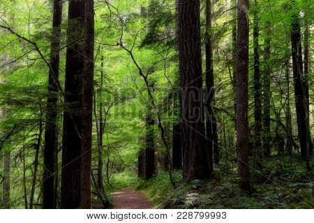 Deep forest trail in Washington state